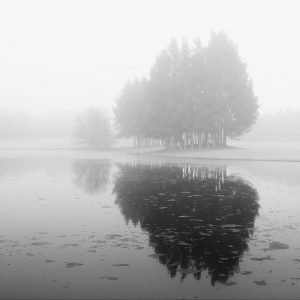 TKP-Misty Morning Hunter Valley Australia